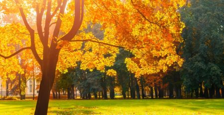 Tree with beautiful fall leaves, orange, yellow and brown.