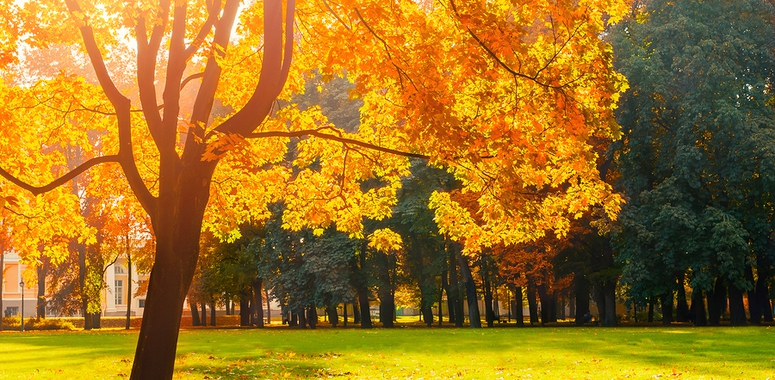 5 real estate marketing tips for fall pdh real estate